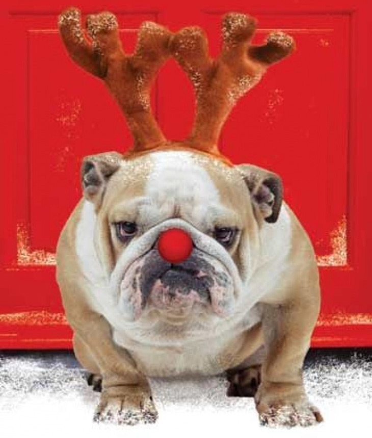 Picture of a Christmas Bulldog